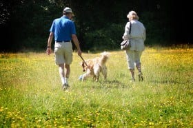 Dog Friendly Hotel New Forest