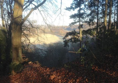 Self Catering Hampshire Criddlestyle Cottage woods
