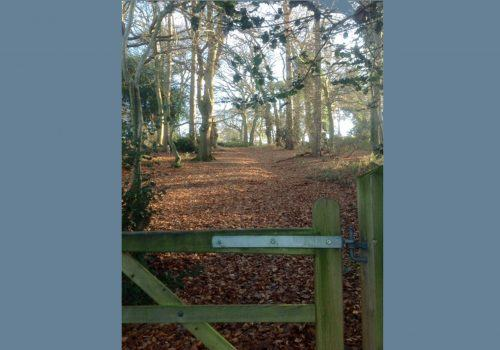 New Forest holiday home private woodlands walk Criddlestyle Cottage