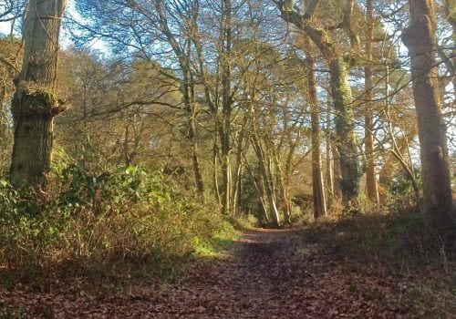 Woodland walks in the New Forest at Mews Hill