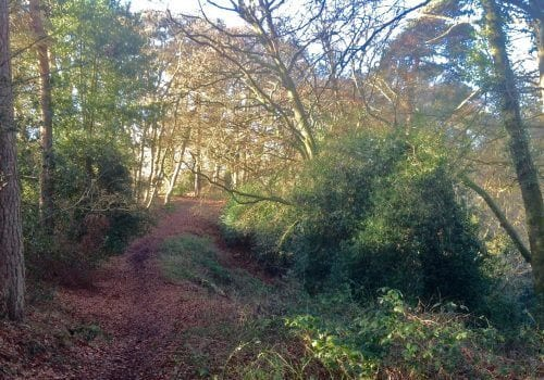 New Forest Self Catering nearby walks Criddlestyle Cottage
