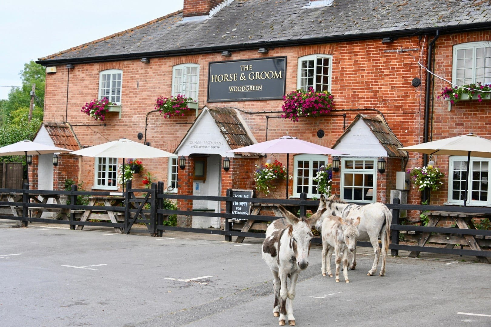 Donkeys roam the villages and towns of the New Forest