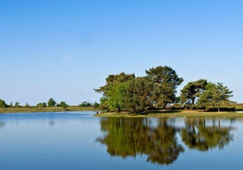 Hatchet pond a natural beauty within the New Forest