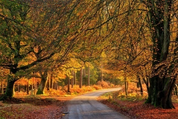 Autumn New Forest Escapes
