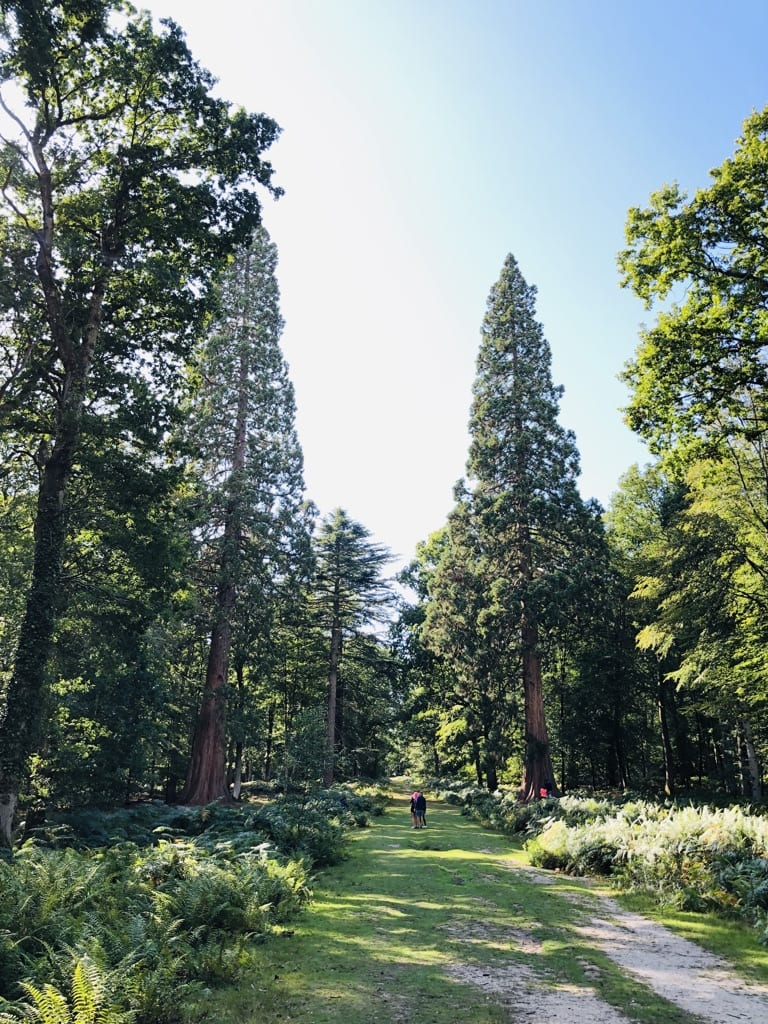 Rhinefield New Forest