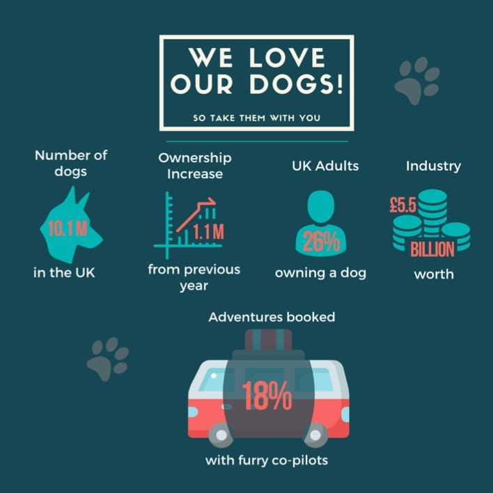 A graphic showing how much Southampton campers loves dogs.