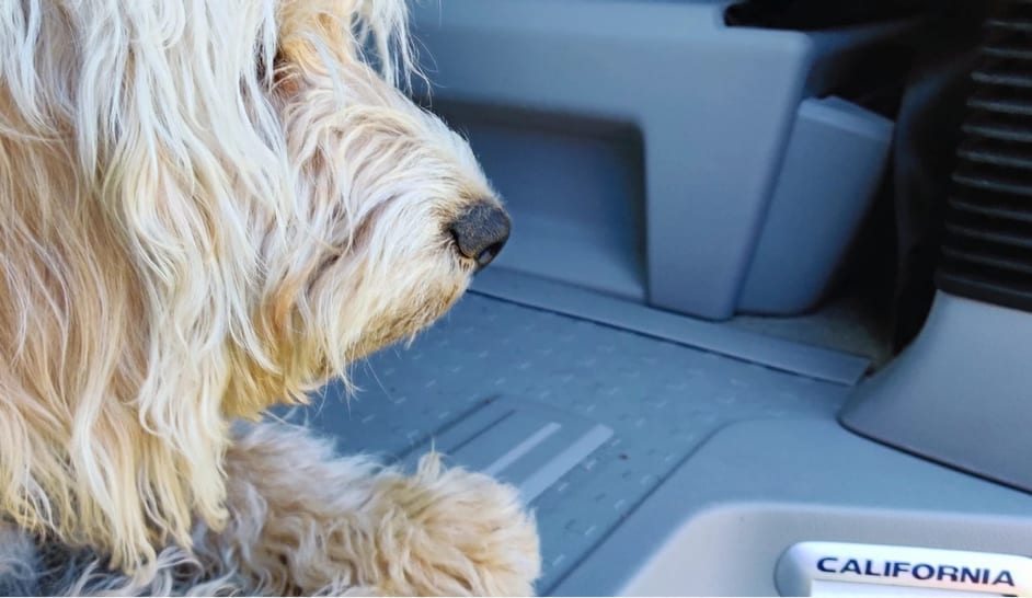 A photo of a dog inside of a VW campervan.