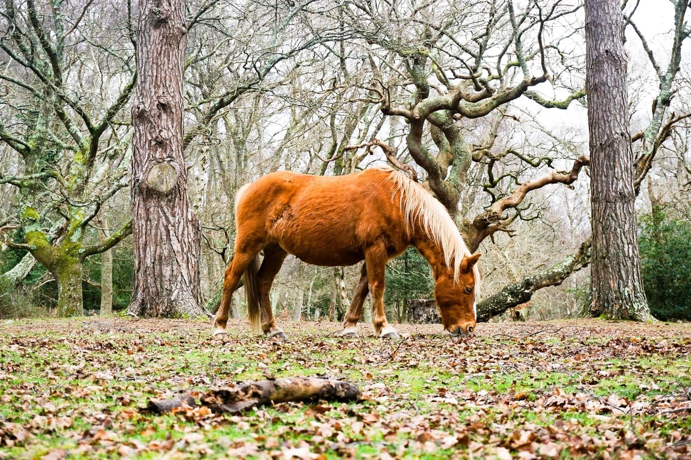 If you hire one of our campervans in The New Forest, you can see all of the amazing wildlife.