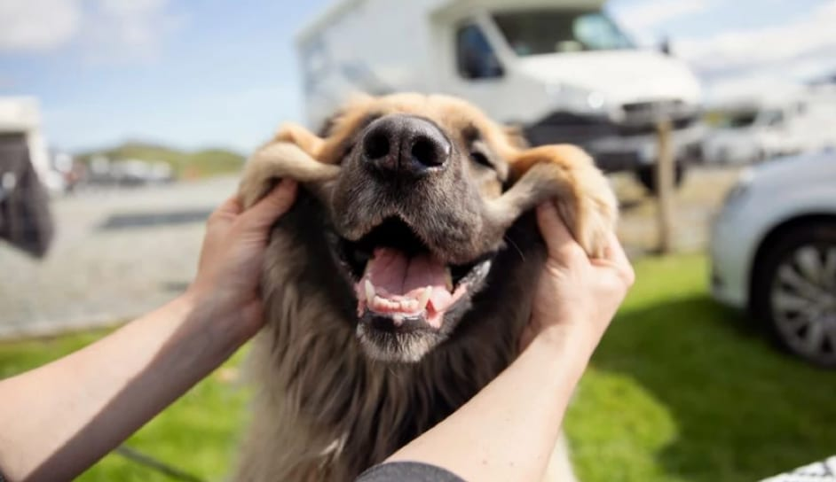 A man pulling the face of a dog so it looks like it is smiling.