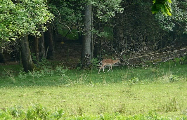 Hire a New Forest campervan and enjoy some gentle walks in The New Forest.