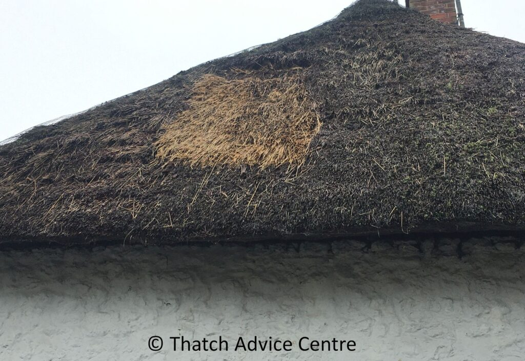Thatch Patching work